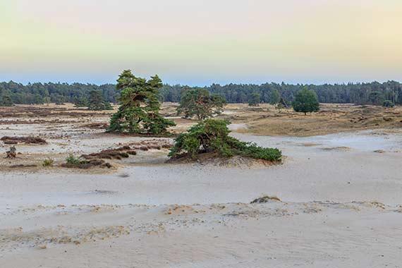 Zandverstuiving Hulshorsterzand bij schemer