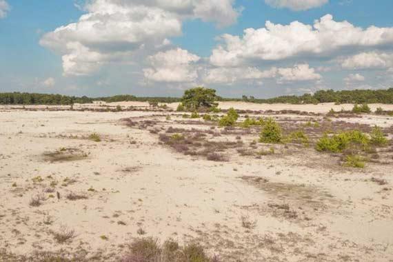 Zandverstuiving Hulshorsterzand